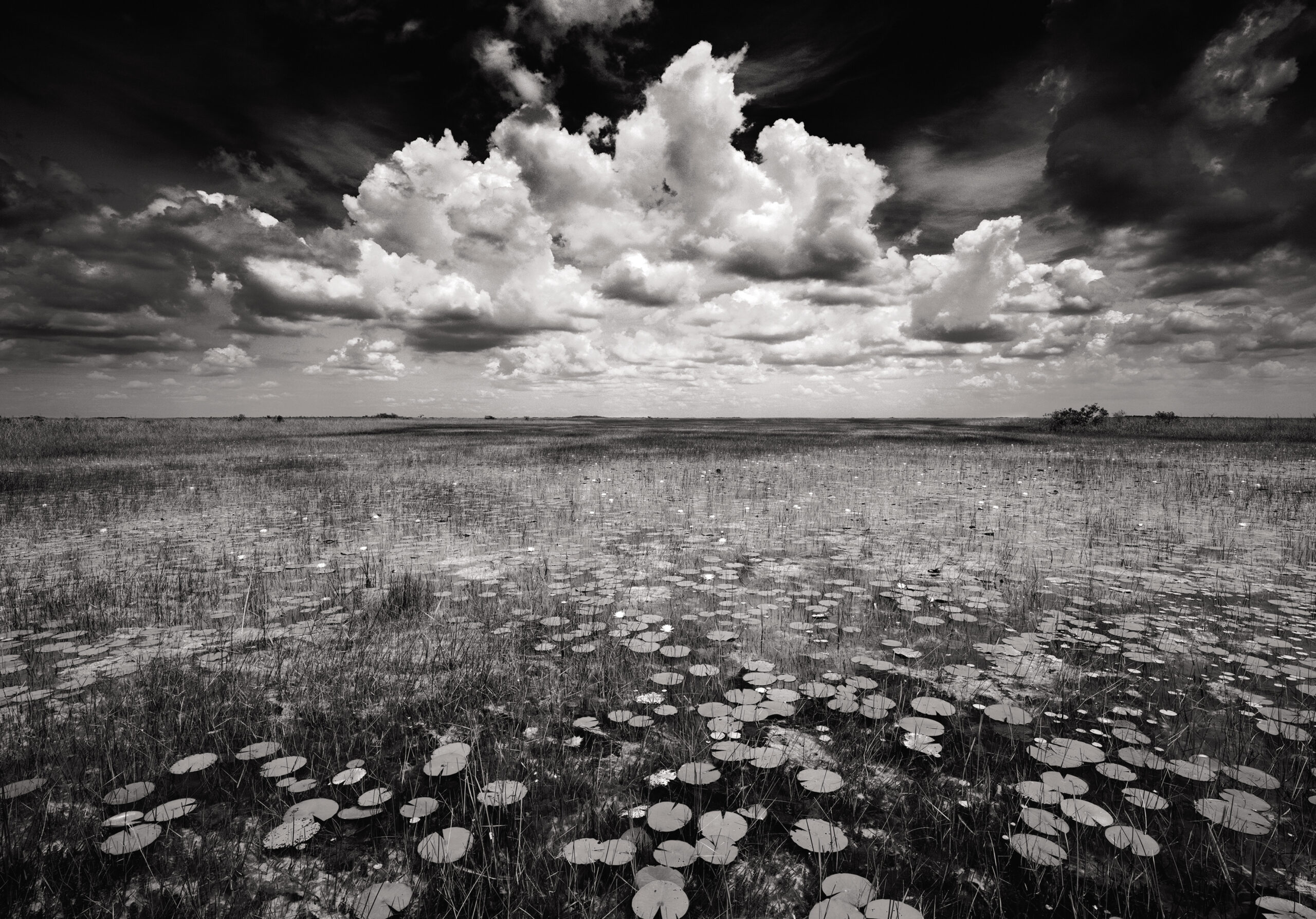 Black and white detailed image of Florida Everglades swamo with scattered lillypads and reeds leading to a horizon and a beautiful cloud centered above the horizon