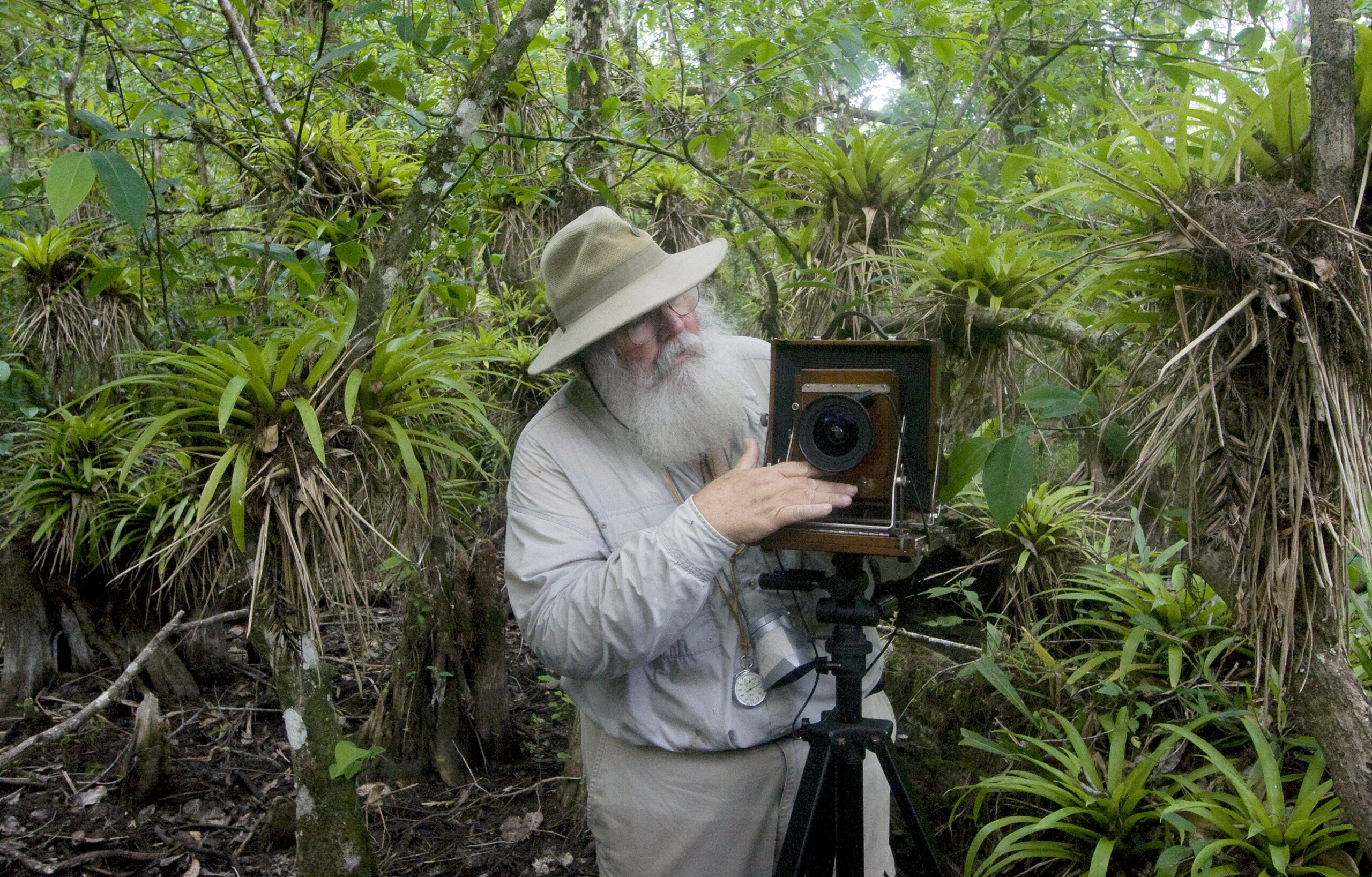 Color image of photographer Clyde Butcher inspecting his camera surrounded by lush green tropical foliage. Clyde Butcher is wearing a wide brimmed hat, glasses, and has a full fluffy white beard and mustache.