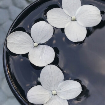 white flower petals in a bucket full of water